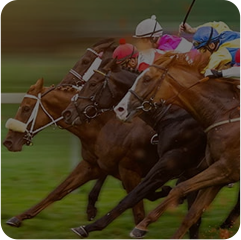 Horse Racing Betting Software