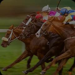 Horse Racing Betting Software