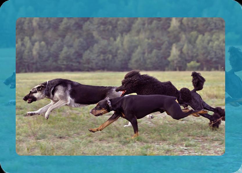 Greyhound Racing Betting Software